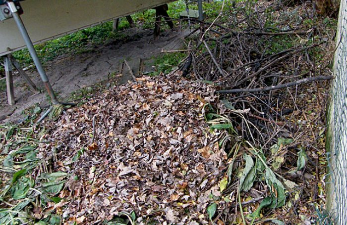 Leaf and brush pile by our garage for the little birds to hide in 20161122-45